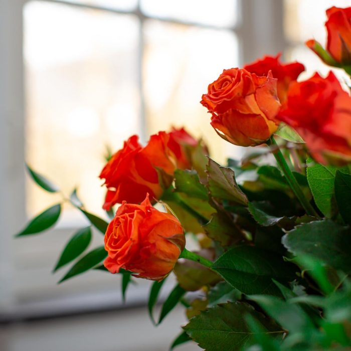 oranje rozen raam 2