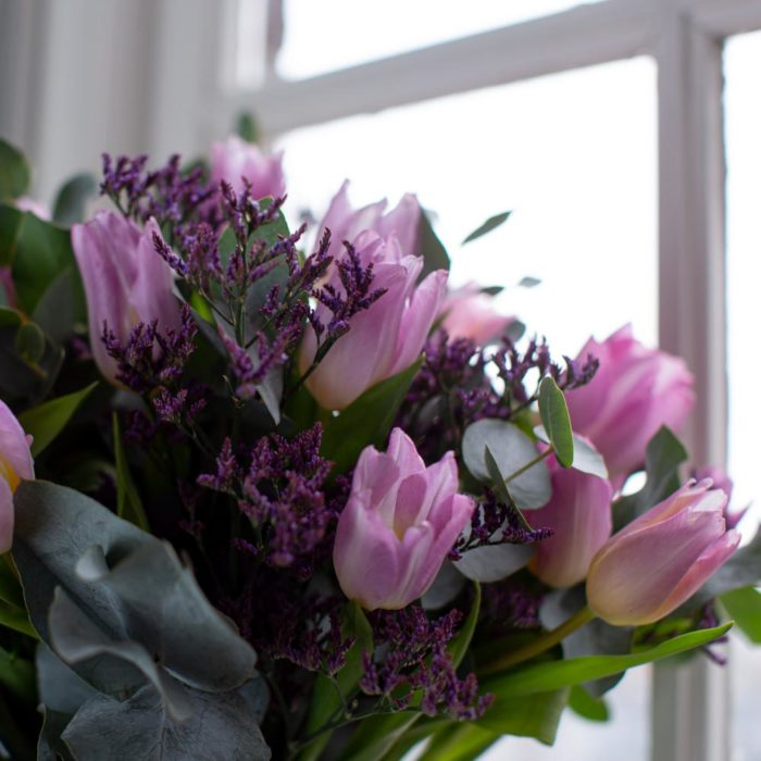 Tulpen Paars Close Up Koningspaar