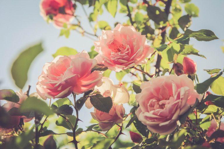Wat zijn typische zomerbloemen?
